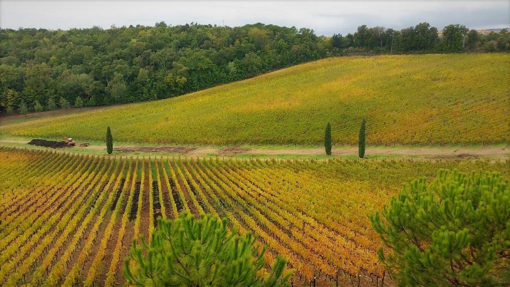 le vigne ricche di colori